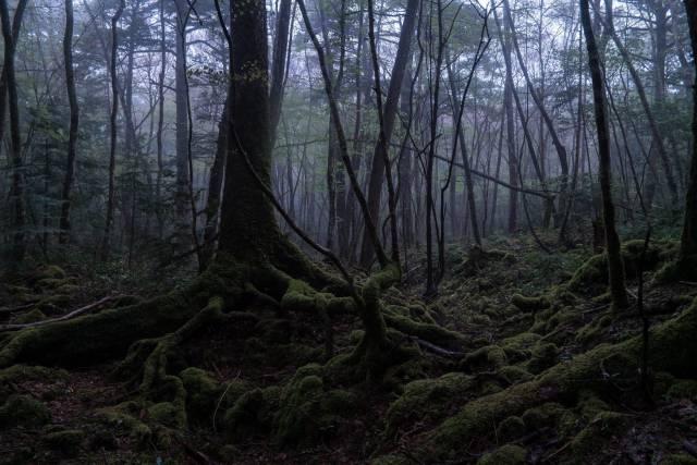 10. ป่าอาโอกิกาฮาระ ในประเทศญี่ปุ่น