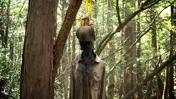10. ป่าอาโอกิกาฮาระ ในประเทศญี่ปุ่น3