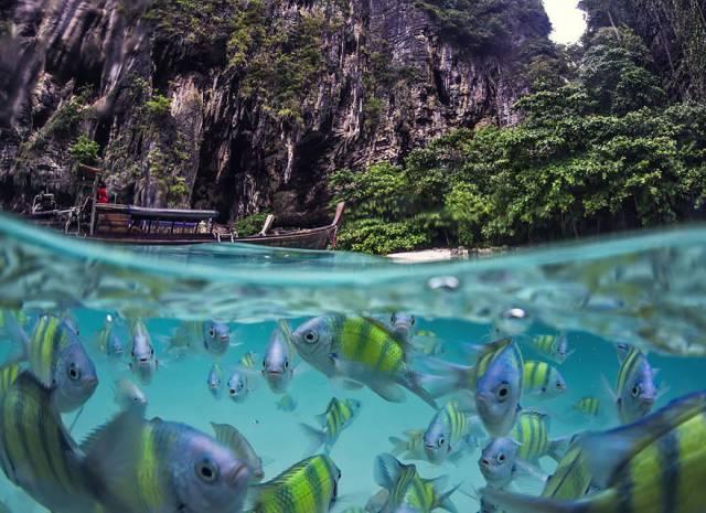 11 Underwater Life Of Poda Island, Thailand