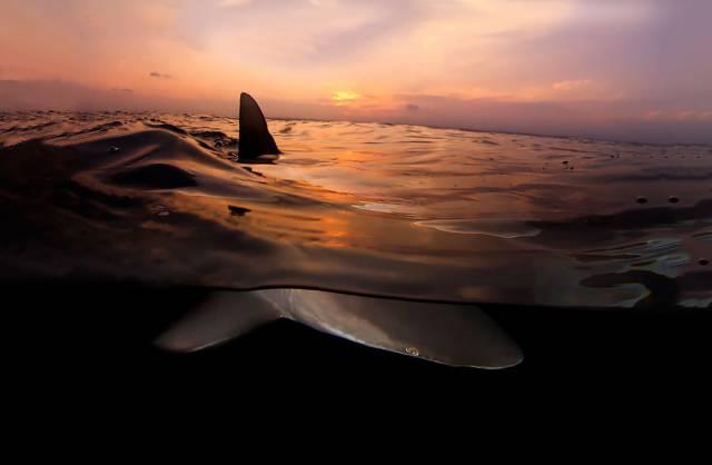 17 Shark