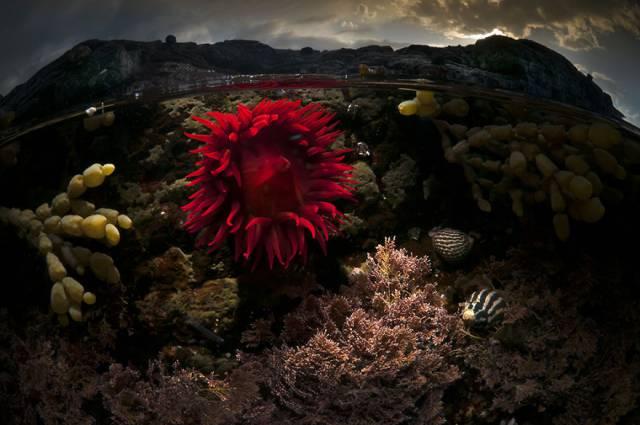 19 Ocean Rose Bass Point, Nsw Australia