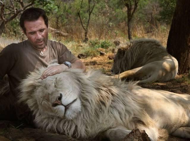 2. Kevin Richardson มนุษย์สิงโต5