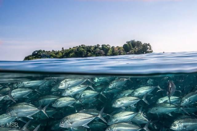 20 Sipadan Island And Its Characteristic Underwater World