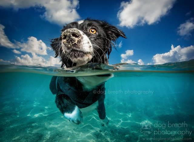 21 Caribbean Dog