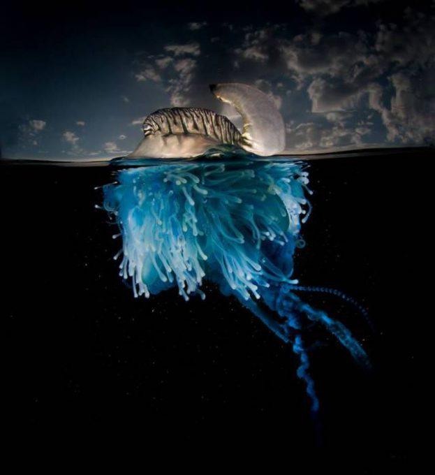 24 Underwater World