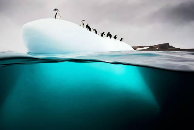 26 Penguins On Ice Floe
