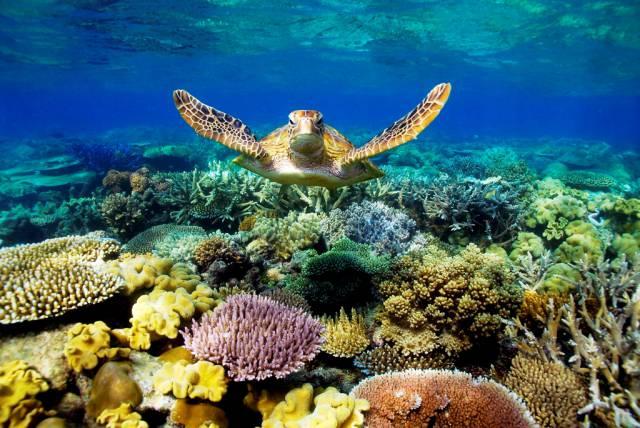 3. แนวปะการังเกรท แบริเออร์ รีฟ3