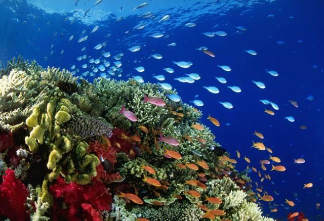3. แนวปะการังเกรท แบริเออร์ รีฟ4