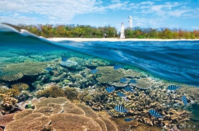 3. แนวปะการังเกรท แบริเออร์ รีฟ6
