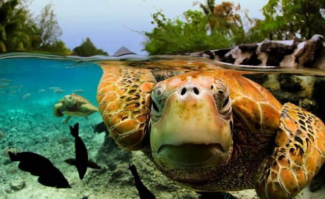 5 Bora Bora