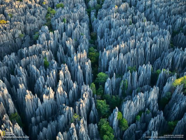 7. ป่าหิน1