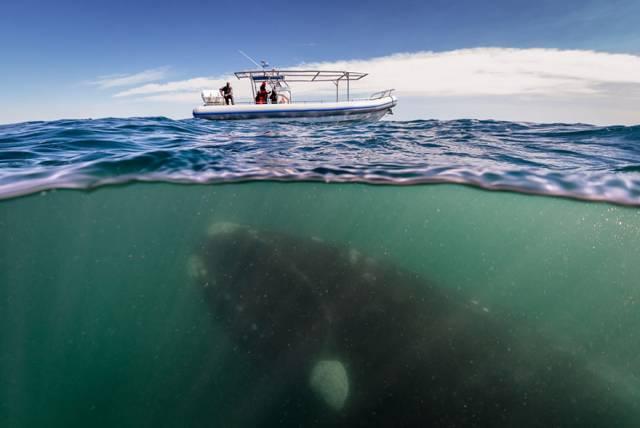 8 Whale