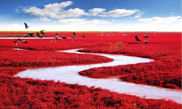 8. Red Beach, Panjin