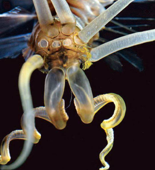 squidworm3_595
