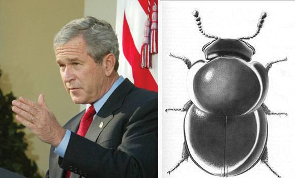%e0%b8%94%e0%b9%89%e0%b8%a7%e0%b8%87%e0%b8%88%e0%b8%ad%e0%b8%a3%e0%b9%8c%e0%b8%88%e0%b8%9a%e0%b8%b8%e0%b8%8a-george-bush-beetle