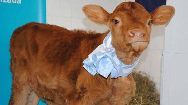 2-%e0%b8%a7%e0%b8%b1%e0%b8%a7%e0%b8%9c%e0%b8%a5%e0%b8%b4%e0%b8%95%e0%b8%99%e0%b9%89%e0%b8%b3%e0%b8%99%e0%b8%a1%e0%b8%84%e0%b8%99-human-milk-from-cow