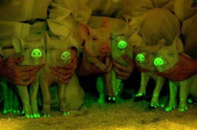 6-%e0%b8%ab%e0%b8%a1%e0%b8%b9%e0%b9%80%e0%b8%a3%e0%b8%b7%e0%b8%ad%e0%b8%87%e0%b9%81%e0%b8%aa%e0%b8%87-glow-in-the-dark-pigs