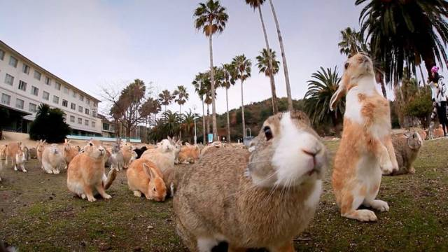 reclaimed-by-nature-okunoshima