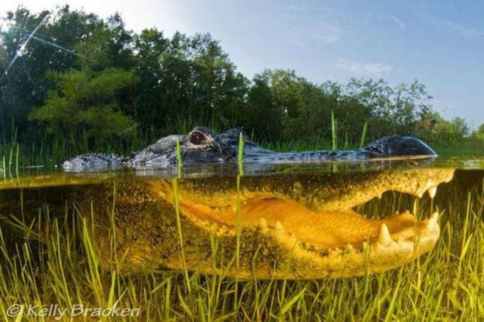 20. The Everglades in Florida