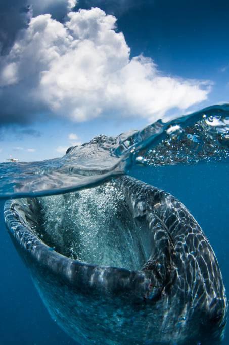 29. Caribbean Sea, Mexico1