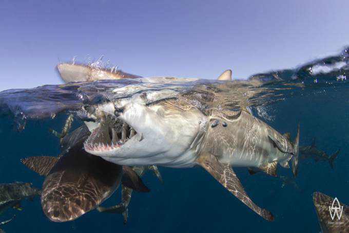 3. Shark Park in South Africa
