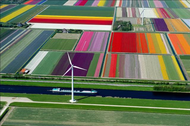 4. ทุ่งดอกทิวลิปในเนเธอร์แลนด์10