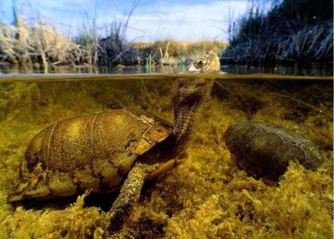 8. Laguna de los Burros in Mexico