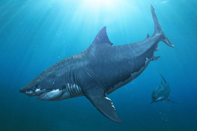 Megalodon-shark-was-outcompeted-for-shrinking-food-supply