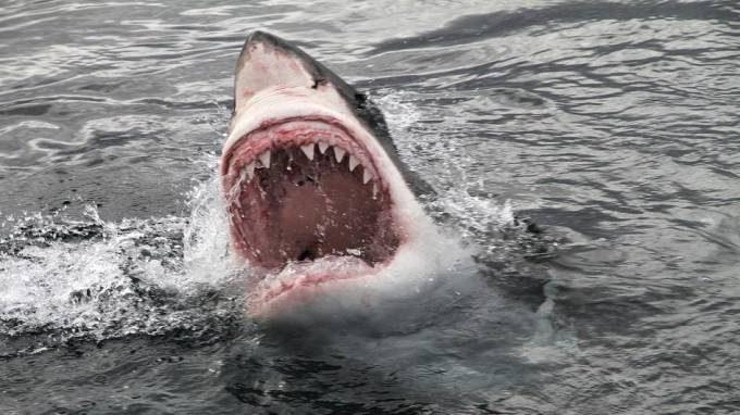 great-white-shark-teeth.jpg.adapt.945.1