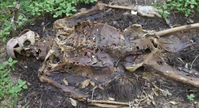 very-decomposed-skelly-this-body-farm-is-the-creepiest-grossest-thing-i-ve-ever-seen-but-it-s-doing-something-incredible-png-180201