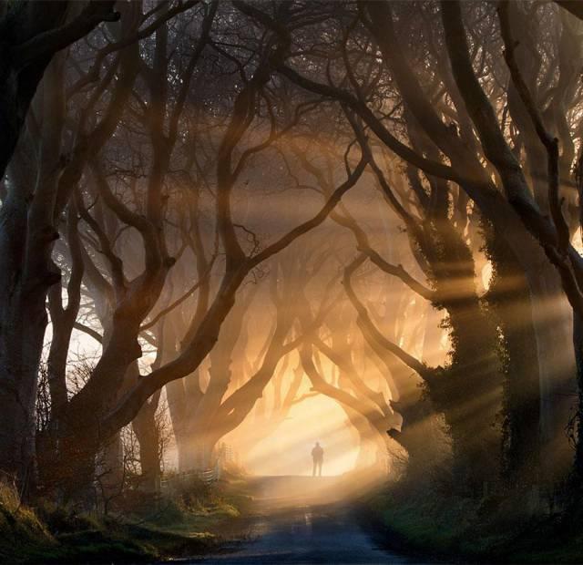 13. The Dark Hedges in Northern Ireland