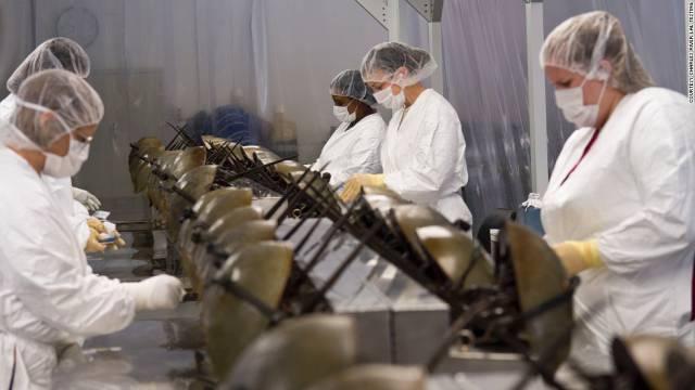140829153439-extracting-horseshoe-crab-blood-horizontal-large-gallery