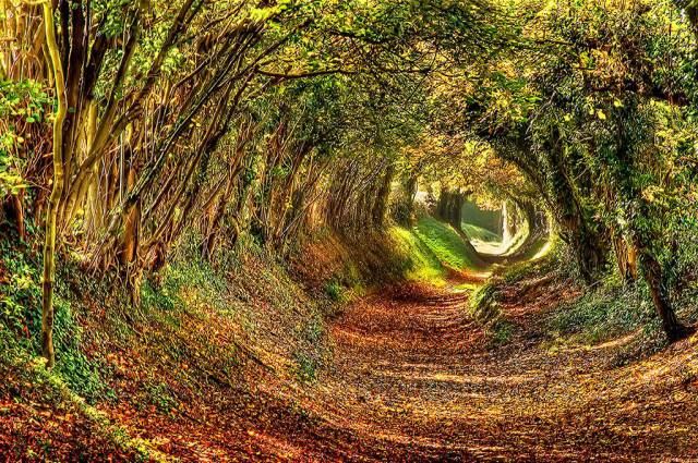 15. Ashdown Forest, West Sussex.