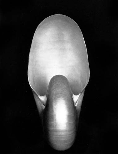 16. Edward Weston