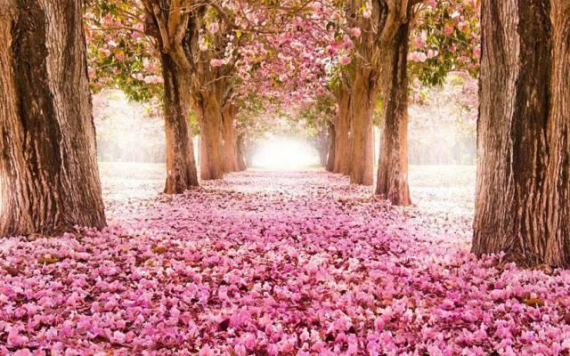 18. Blossom Path (Location Unknown)