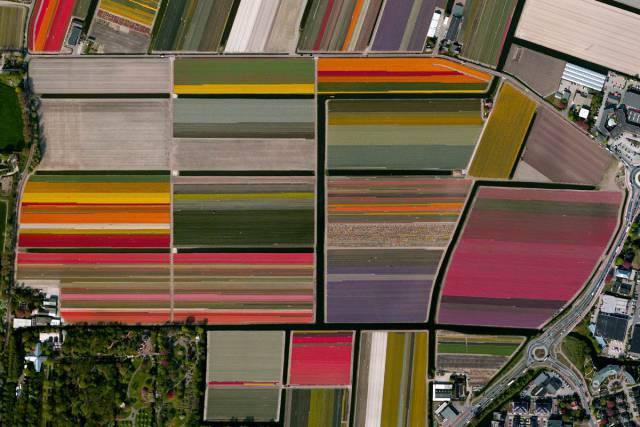 19. Tulip Fields – Lisse