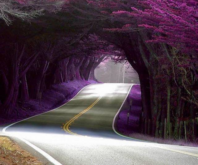 20. Tree Tunnel in Portugal