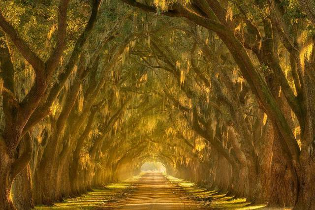 21. Oak Alley along the Mississippi River outside New Orleans, Louisiana