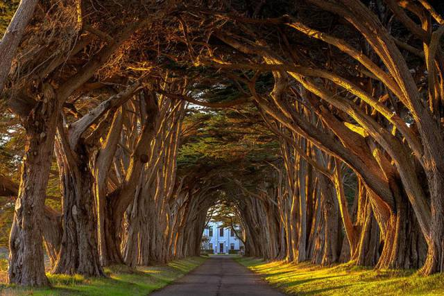 23. Cypress Tree Tunnel At The Historic Marconi Wireless Station, California