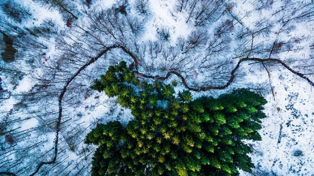 24. ป่าคาลบีริส เดนมาร์ก