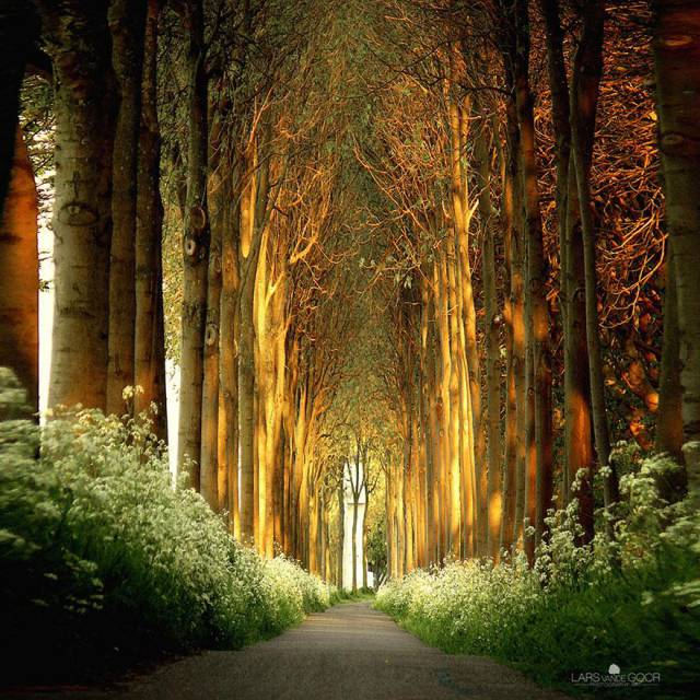 3. Tree Tunnel in Netherlands