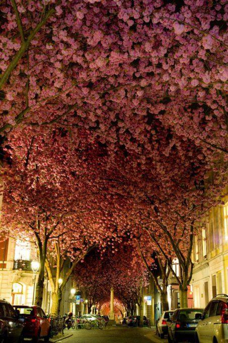 4. Street in Bonn, Germany
