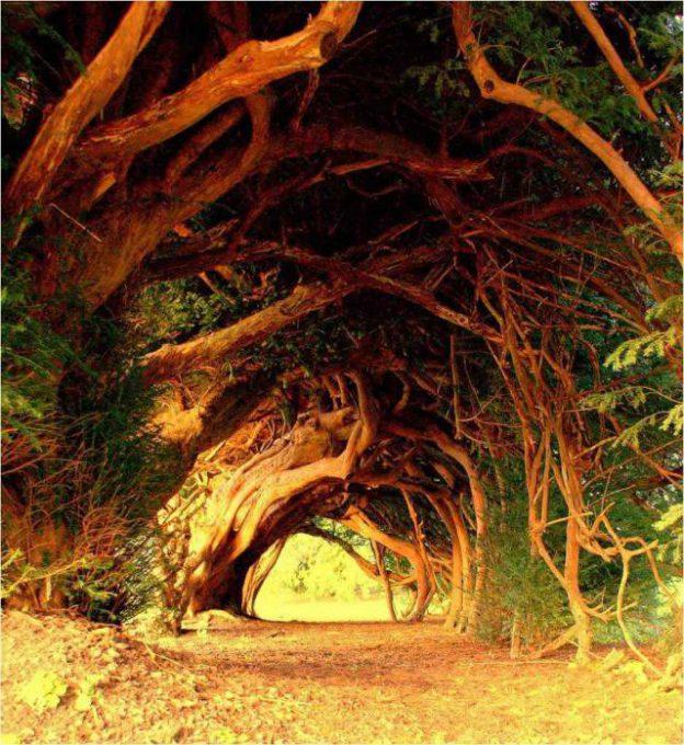 6. Yew Tree Tunnel, Carmarthenshire