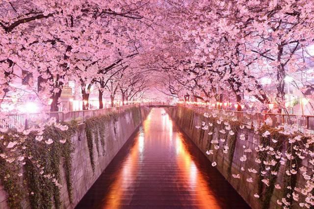 7. Sakura Tunnel, Japan