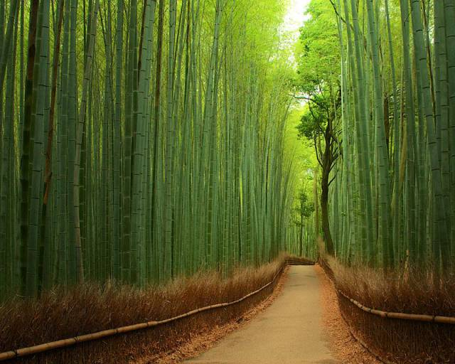 8. Bamboo Path in Kyoto, Japan