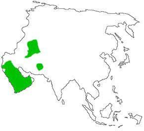 map_distribute_sandcat_asia