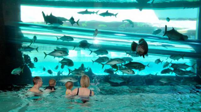 20. The Pools at Golden Nugget Las Vegas 1