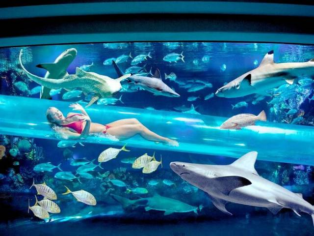 20. The Pools at Golden Nugget Las Vegas 32