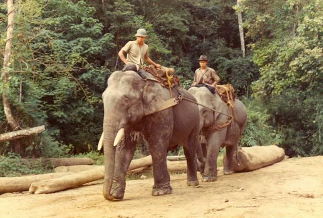 46. ช้างลากซุง ที่จังหวัดเชียงใหม่ ปี 1973
