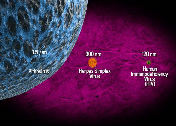 tnc140304_giantvirus_large-1-jpg-crop-promo-mediumlarge